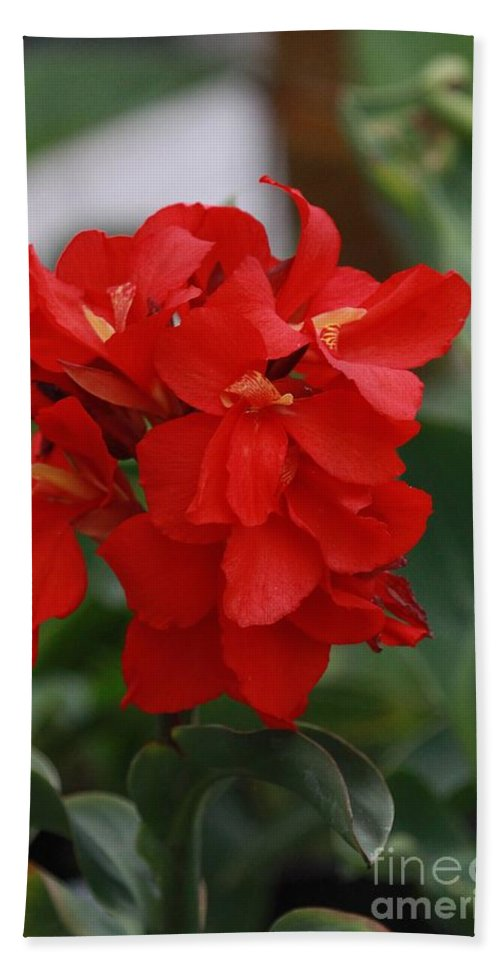 Tropical Red Canna Lilly Hand Towel featuring the photograph Tropical Red Canna Lilly by Leanne Matson