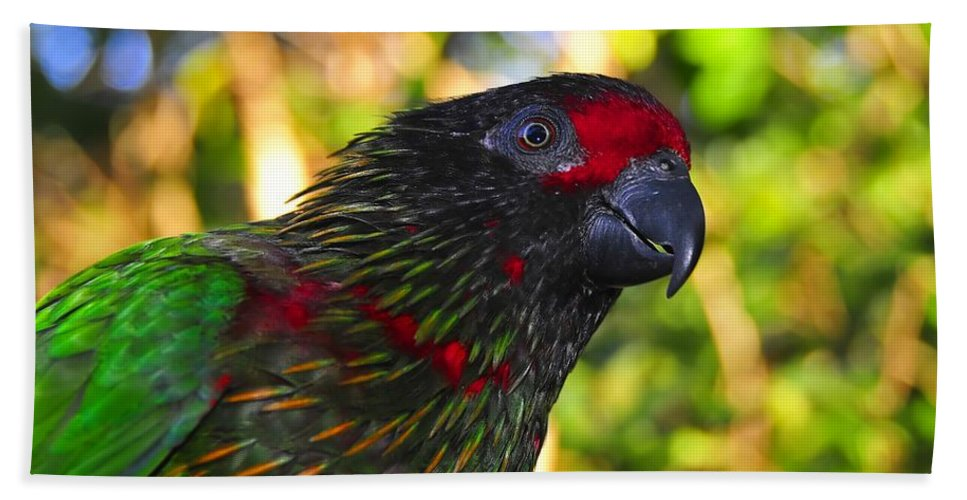 Bird Hand Towel featuring the photograph Tropical Wonder by David Lee Thompson