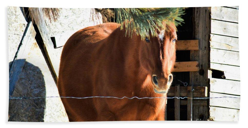 Horse Bath Sheet featuring the photograph Trump Hair by William Tasker