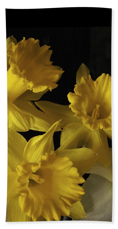 Macro Hand Towel featuring the photograph Trumpet Daffodils by Nancy Griswold