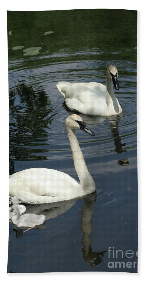 Trumpeter Swans Bath Towel featuring the photograph Trumpeter Swans by Judy Whitton