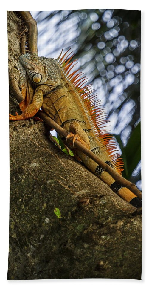 Iguana Hand Towel featuring the photograph Trying To Blend In by Belinda Greb