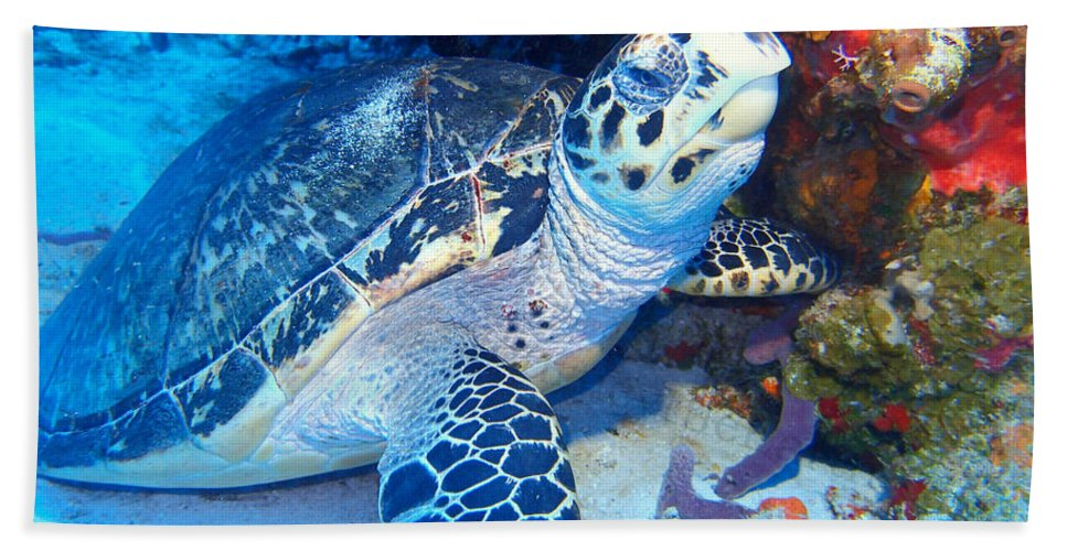 Hand Towel featuring the photograph Tucked Away Turtle by Todd Hummel