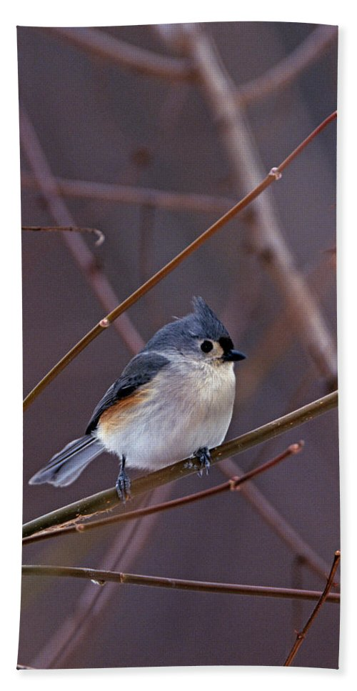 Tufted Titmouse Bath Sheet featuring the photograph Tufted Titmouse In Winter by John Harmon