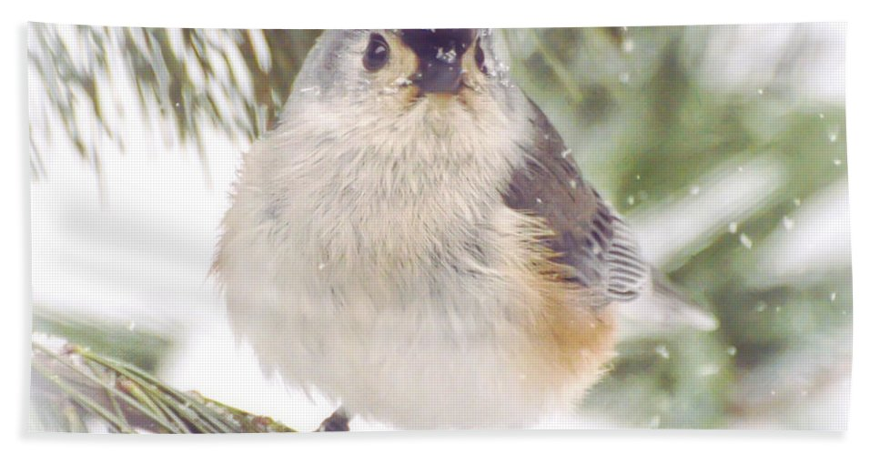 Tufted Titmouse Bath Sheet featuring the photograph Tufted Titmouse Snow Face by Kerri Farley