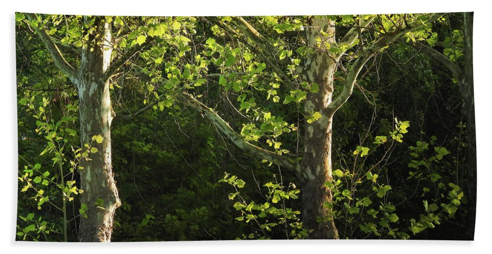 Maple Bath Towel featuring the photograph Branches Of Lovely Light by Laura Ragland