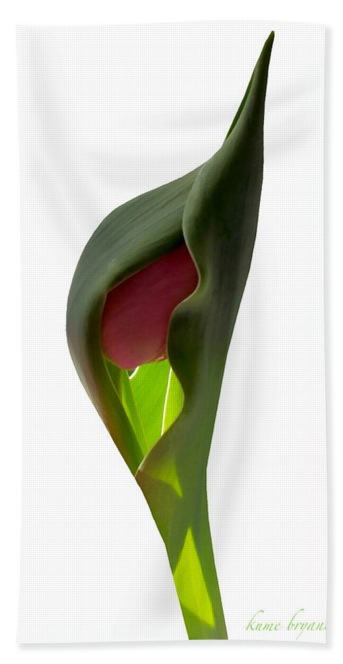 Green Hand Towel featuring the photograph Tulip 4 by Kume Bryant