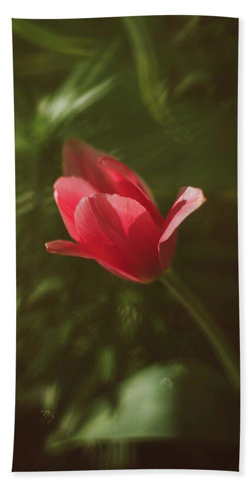 Tulip Bath Sheet featuring the photograph Tulip by Alicja Mazur-Halon