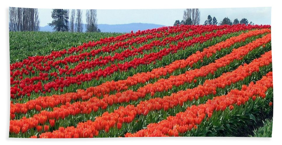 Agriculture Bath Sheet featuring the photograph Tulip Town 18 by Will Borden