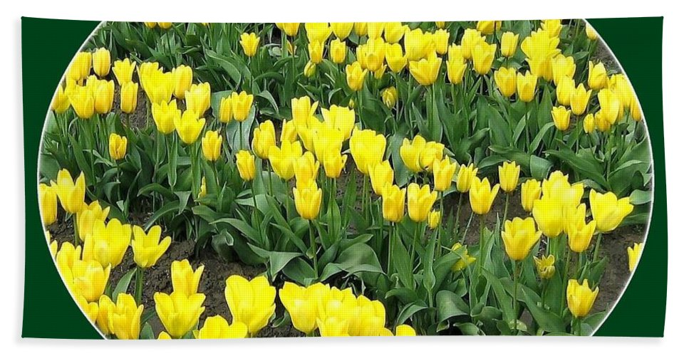 Agriculture Bath Sheet featuring the photograph Tulip Town 2 by Will Borden
