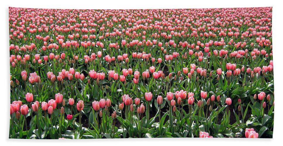 Agriculture Bath Sheet featuring the photograph Tulip Town 5 by Will Borden
