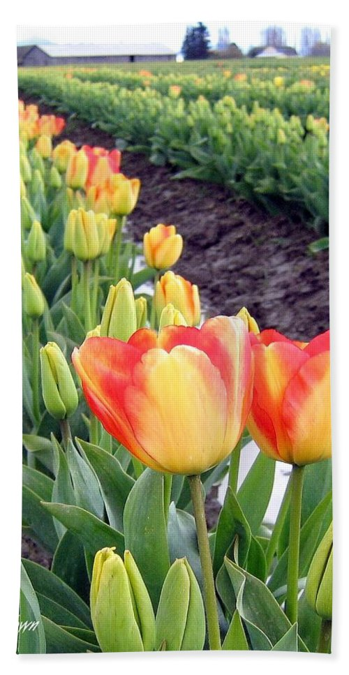 Agriculture Bath Sheet featuring the photograph Tulip Town 6 by Will Borden