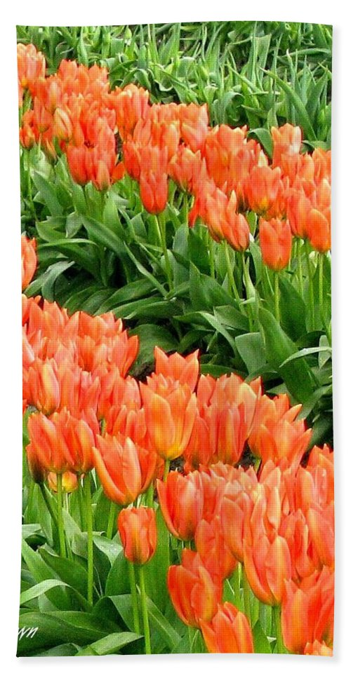Agriculture Bath Sheet featuring the photograph Tulip Town 7 by Will Borden