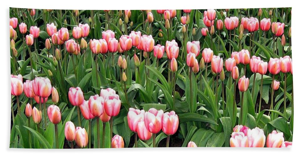 Agriculture Bath Sheet featuring the photograph Tulip Town 8 by Will Borden