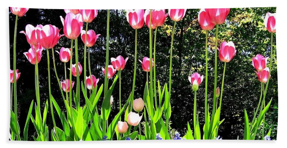 Tulips Bath Sheet featuring the photograph Tulipfest 10 by Will Borden