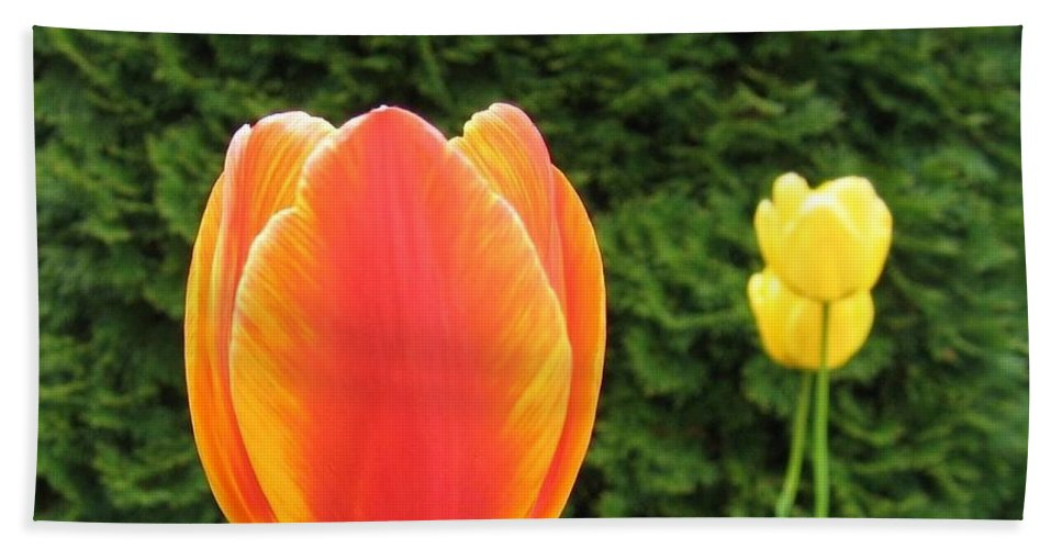 Tulips Hand Towel featuring the photograph Tulipfest 4 by Will Borden