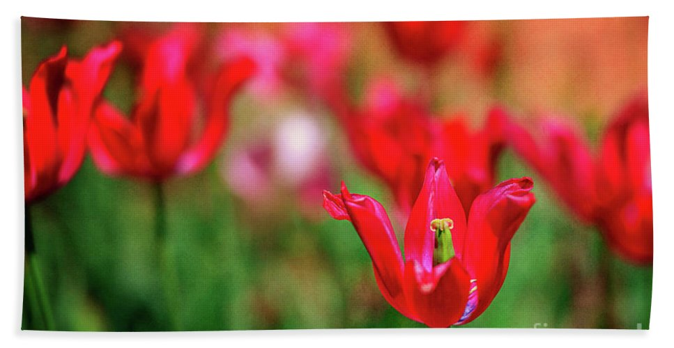 Tamyra Hand Towel featuring the photograph Tulips At Honor Heights by Tamyra Ayles