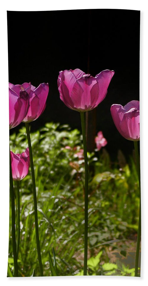 Tulips Bath Sheet featuring the photograph Tulips by Bill Cannon