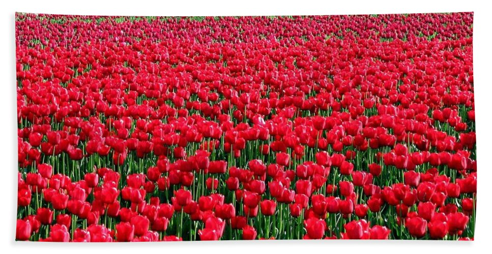Tulips Bath Sheet featuring the photograph Tulips By The Million by Will Borden