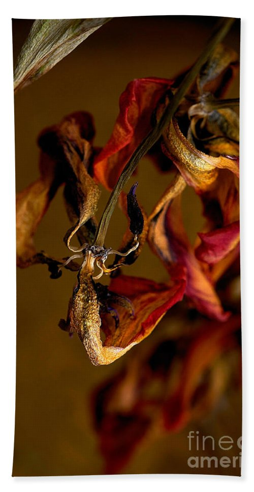 Red Tulip Hand Towel featuring the photograph Tulip's Demise - A Natural Abstract by Lois Bryan