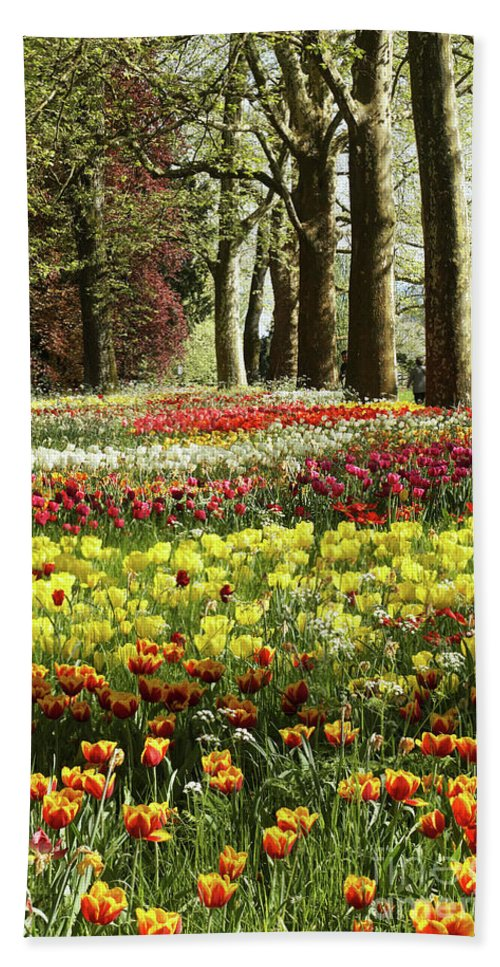 Prott Hand Towel featuring the photograph Tulips Everywhere 1 by Rudi Prott