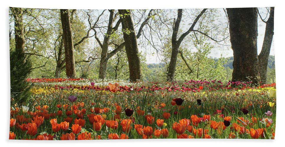 Prott Hand Towel featuring the photograph Tulips Everywhere 2 by Rudi Prott