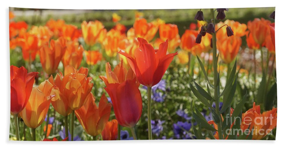 Prott Hand Towel featuring the photograph Tulips Everywhere 3 by Rudi Prott