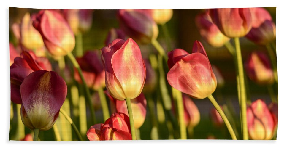 Tulip Print Bath Sheet featuring the photograph Tulips In Public Garden by Nicole Freedman