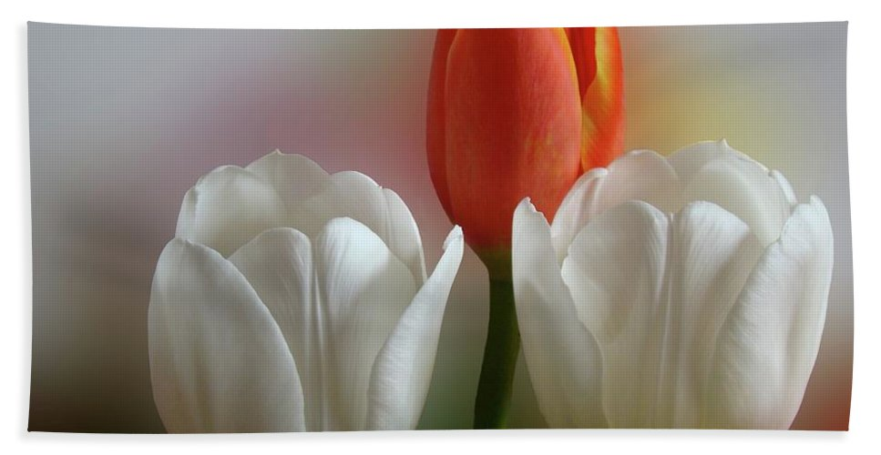 Spring Flowers Bath Towel featuring the photograph Tulips by Sandy Keeton