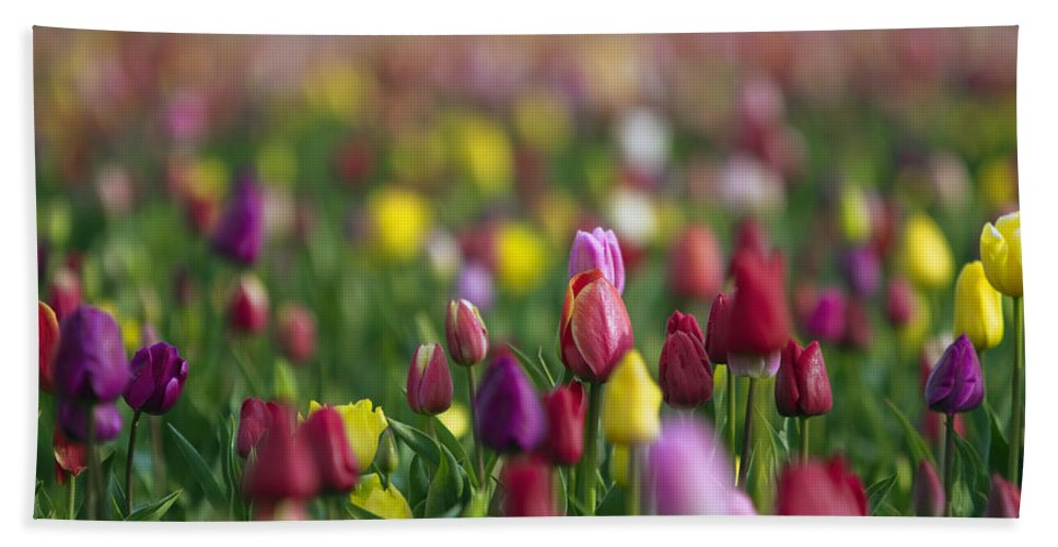 Flowers Hand Towel featuring the photograph Tulips by William Freebilly photography