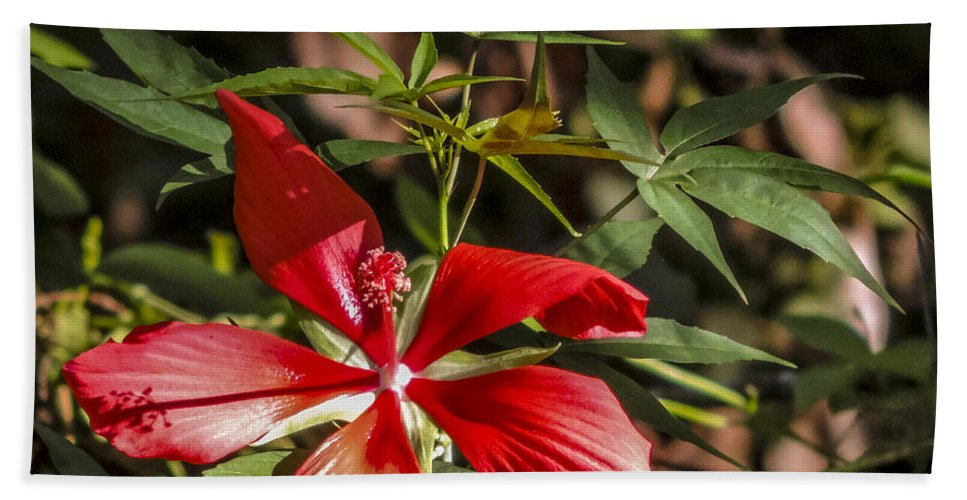 Audubon Hand Towel featuring the photograph Turk's Cap 2 by Nancy L Marshall