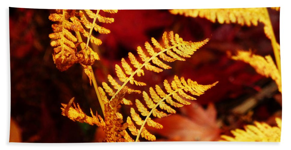 Autumn Bath Sheet featuring the photograph Turning To Autumn by Connie Handscomb