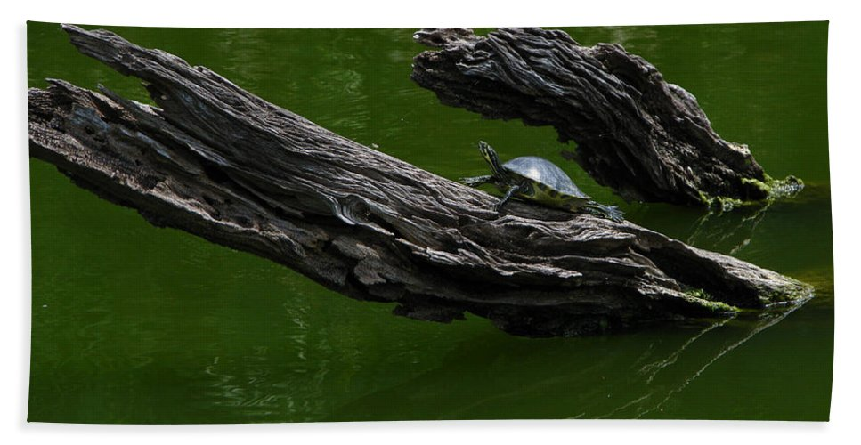 Art For The Wall...patzer Photography Bath Towel featuring the photograph Turtle Art by Greg Patzer
