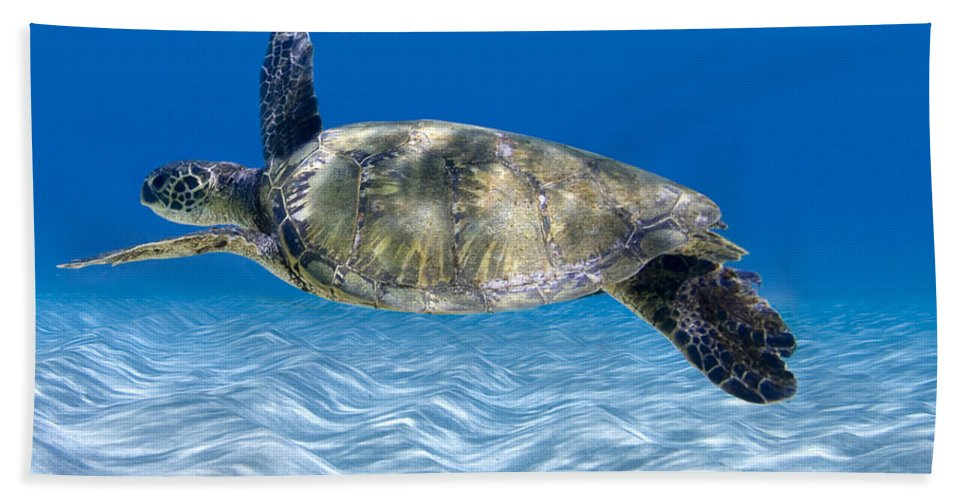 Turtle Hand Towel featuring the photograph Turtle Flight - Part 2 Of 3 by Sean Davey