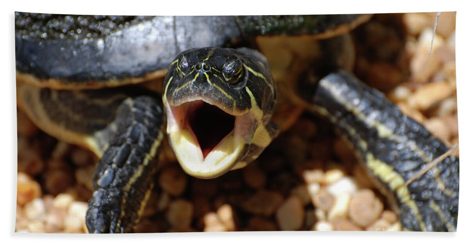 Turtle Hand Towel featuring the photograph Turtle With His Mouth Wide Open by DejaVu Designs