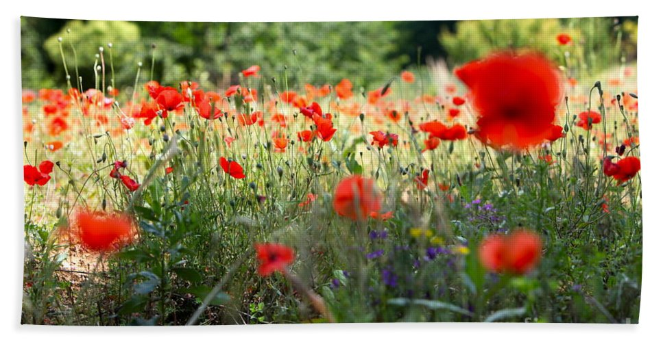 Poppies Bath Sheet featuring the photograph Tuscan Poppies by Nadine Rippelmeyer