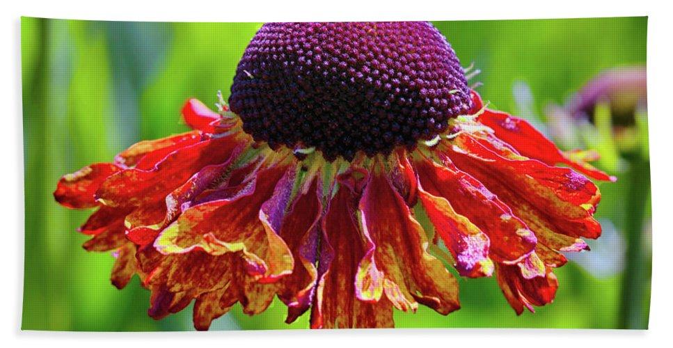 Flower Bath Sheet featuring the photograph Tutu by Debbie Deboo