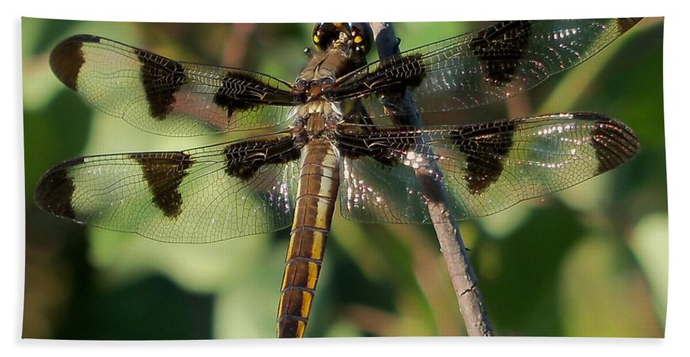 Lynne Miller Hand Towel featuring the photograph Twelve Spotted Skimmer Dragonfly by Lynne Miller