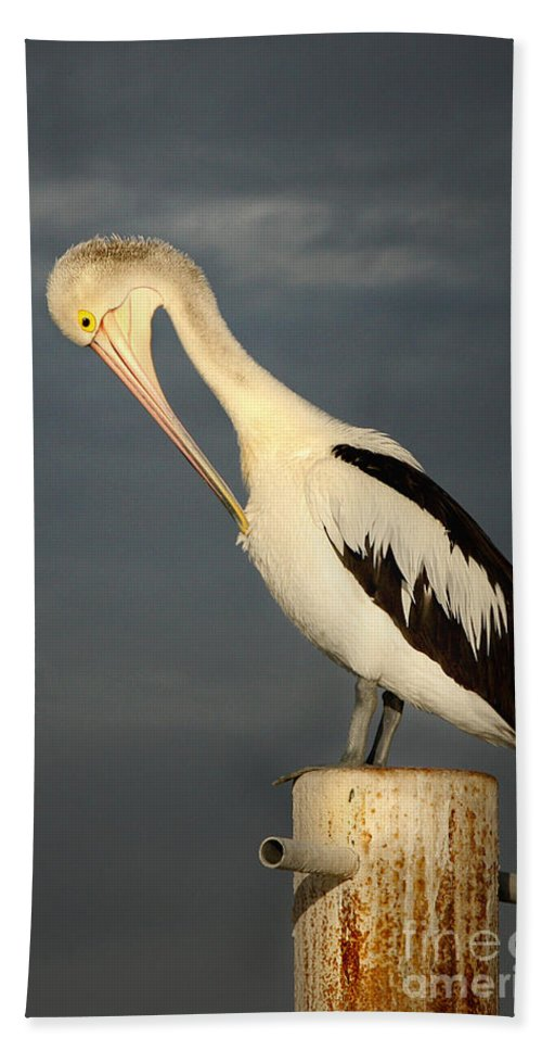 Australian Pelican Hand Towel featuring the photograph Twilight by Marion Cullen