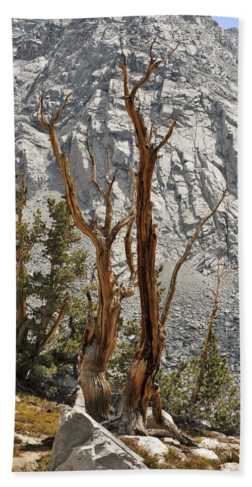 Tree Bath Sheet featuring the photograph Twin Sticks by Kelley King