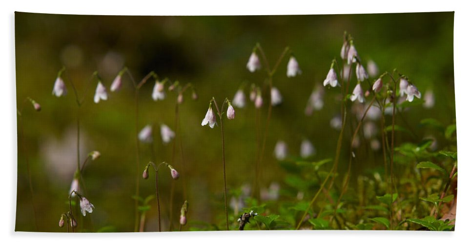 Helvetinjarvi National Park Hand Towel featuring the photograph Twinflower by Jouko Lehto