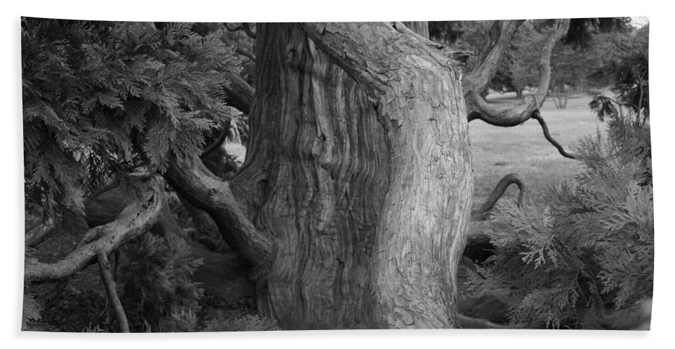 Tree Bath Towel featuring the photograph Twisted Old Tree by Tina Meador