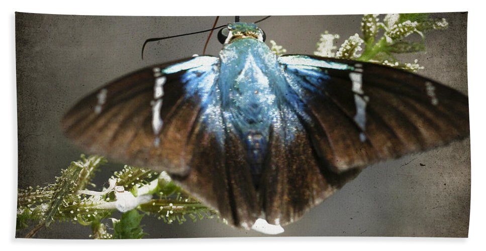Butterflies Bath Sheet featuring the photograph Two-barred Flasher by Ingrid Smith-Johnsen