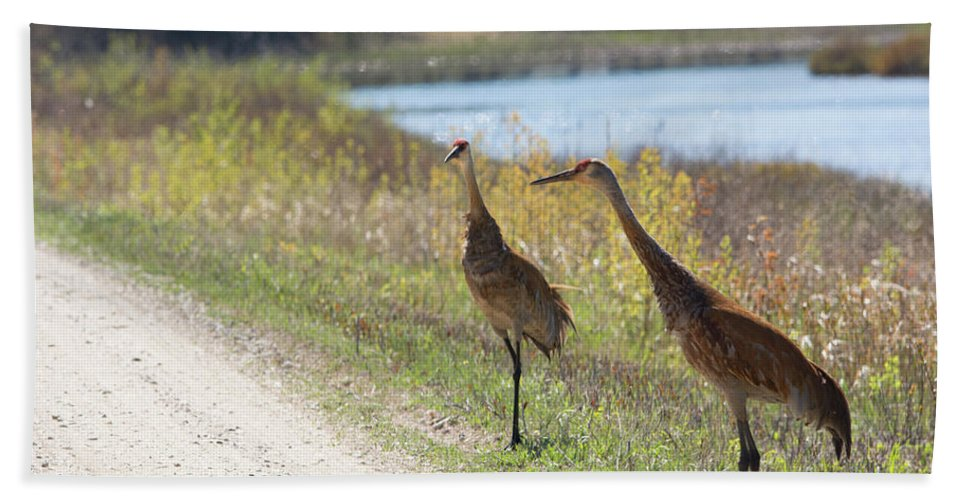 Sandhill Crane Bath Sheet featuring the photograph Two Cranes by Linda Kerkau