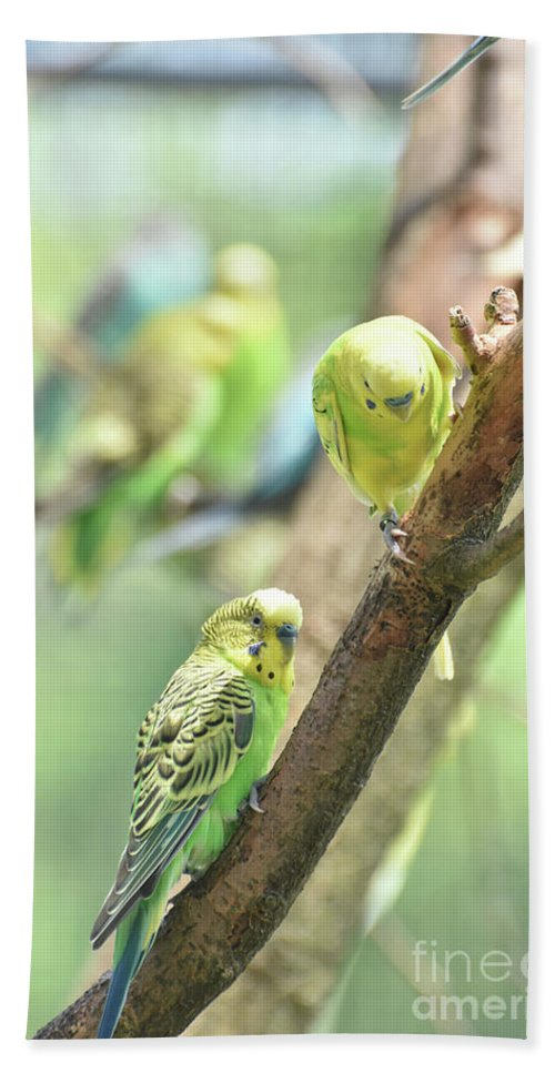 Budgie Hand Towel featuring the photograph Two Cute Little Parakeets In A Tree by DejaVu Designs