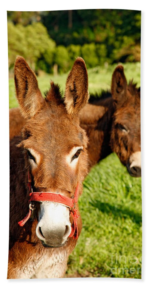 Animals Bath Towel featuring the photograph Two Donkeys by Gaspar Avila