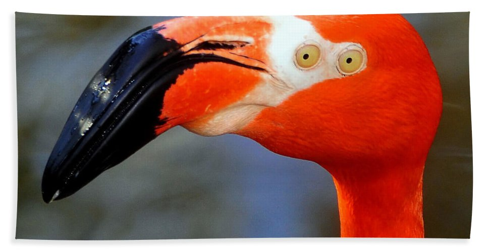 Digital Photography Bath Sheet featuring the photograph Two Eyed Flamingo by David Lee Thompson