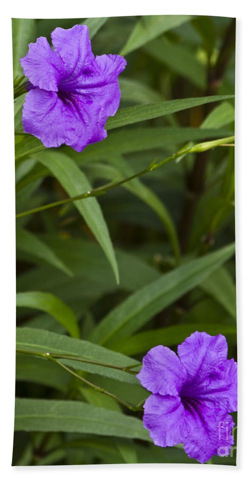 Purple Flower Bath Sheet featuring the photograph Two For One by Ken Frischkorn