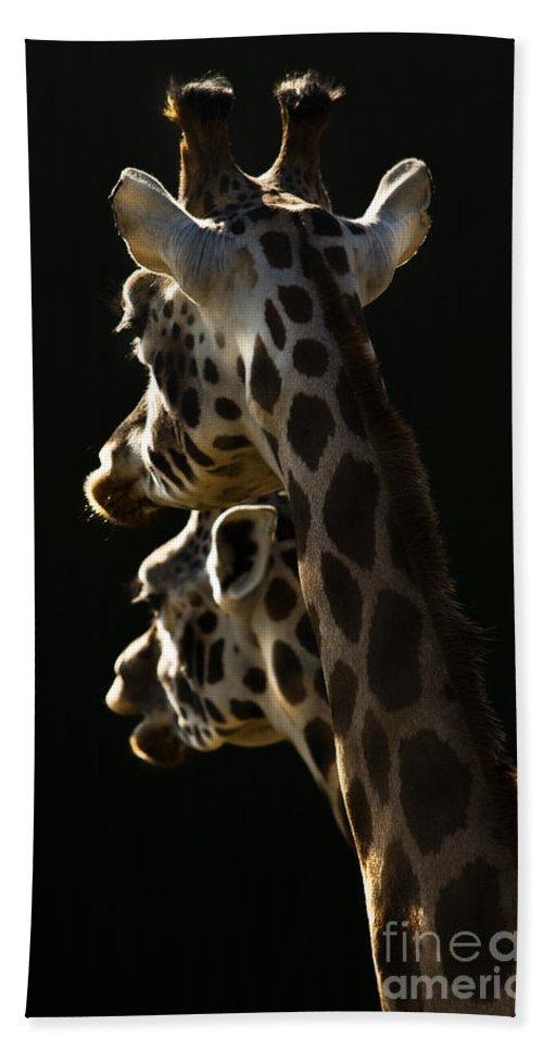 Giraffe Hand Towel featuring the photograph Two Headed Giraffe by Angel Ciesniarska