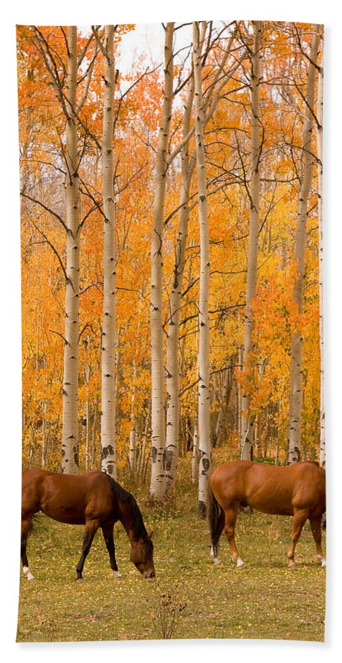 Horse Bath Sheet featuring the photograph Two Horses Grazing In The Autumn Air by James BO Insogna